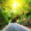 Road in forest at sunset — Stock Photo