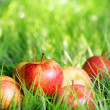 Red apples on green grass — Stock Photo #24104117