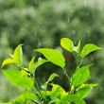 Rain — Stock Photo #24105661