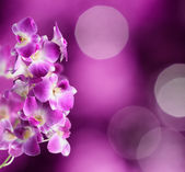 Purple and white orchid flowers on purple background — Stock Photo