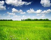 Campo verde bajo el cielo azul. paisaje de verano. — Foto de Stock