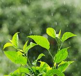 Déšť — Stock fotografie