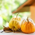 Pumpkins on rural landscape background — Stock Photo