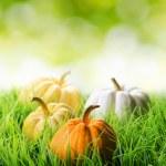 citrouilles en herbe verte sur fond naturel — Photo