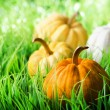 Pumpkins on green natural grass — Stok Fotoğraf #26329263