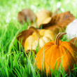 Pumpkins on green natural grass — Stok Fotoğraf #26329265