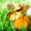 Pumpkins on green natural grass — Foto de stock #26329265