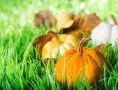 Pumpkins on green natural grass — Stock Photo