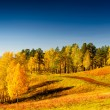 Autumn — Stock Photo #27218999