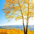 Autumn — Stock Photo #27219025