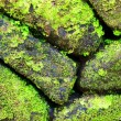 Green moss on old stone wall — Stock Photo #28532511