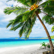 Green tree on white sand beach — Stock Photo #29027655