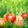 Red apples on green grass — Stock Photo #29027687