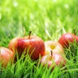 Red apples on green grass — Stock Photo #29027689