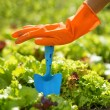 Woman in orange gloves working in the garden — Stock Photo