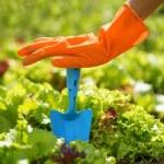 Woman in orange gloves working in the garden — Stock Photo