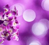 Fiori di orchidea viola e bianchi su sfondo viola — Foto Stock