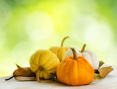 Pumpkins on green natural background — Stock Photo