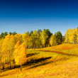 Autumn — Stockfoto #31109701