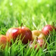 Stock Photo: Red apples on green grass