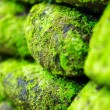 Green moss on old stone wall — Stock Photo