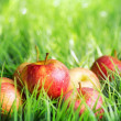 Red apples on green grass — Stock Photo #31386737