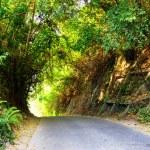 camino en el bosque al atardecer — Foto de Stock