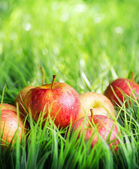Maçãs vermelhas na grama verde. — Foto Stock