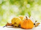 Pumpkins on green natural background — Photo