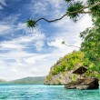 Tropical seashore — Stock Photo #31871091