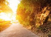 Vägen i skogen vid solnedgången — Stockfoto