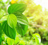 Green fresh leaves on natural background — Стоковое фото