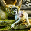 Monkeys in stone temple. Bali Island, Indonesia — Stock Photo #32386229