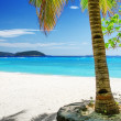 Green tree on white sand beach — Stock Photo
