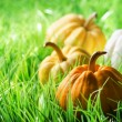 Foto Stock: Pumpkins on green natural grass