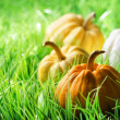 Pumpkins on green natural grass — Stok fotoğraf