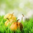 Pumpkins in green grass on natural background — Stok fotoğraf