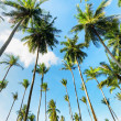 Palm trees against blue sky — Stock Photo #33444879