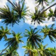 Palm trees against blue sky — Stock Photo #33444885