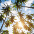 Palm trees against blue sky — Stock Photo