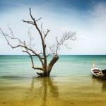 suche drzewa i łodzi w wodzie — Zdjęcie stockowe