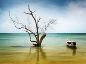 Dry tree and boat in water — Stock Photo