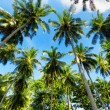 Palm trees against blue sky — Stock Photo #34263989