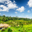 Ricce terrace of Bali Island, Indonesia — Stock Photo