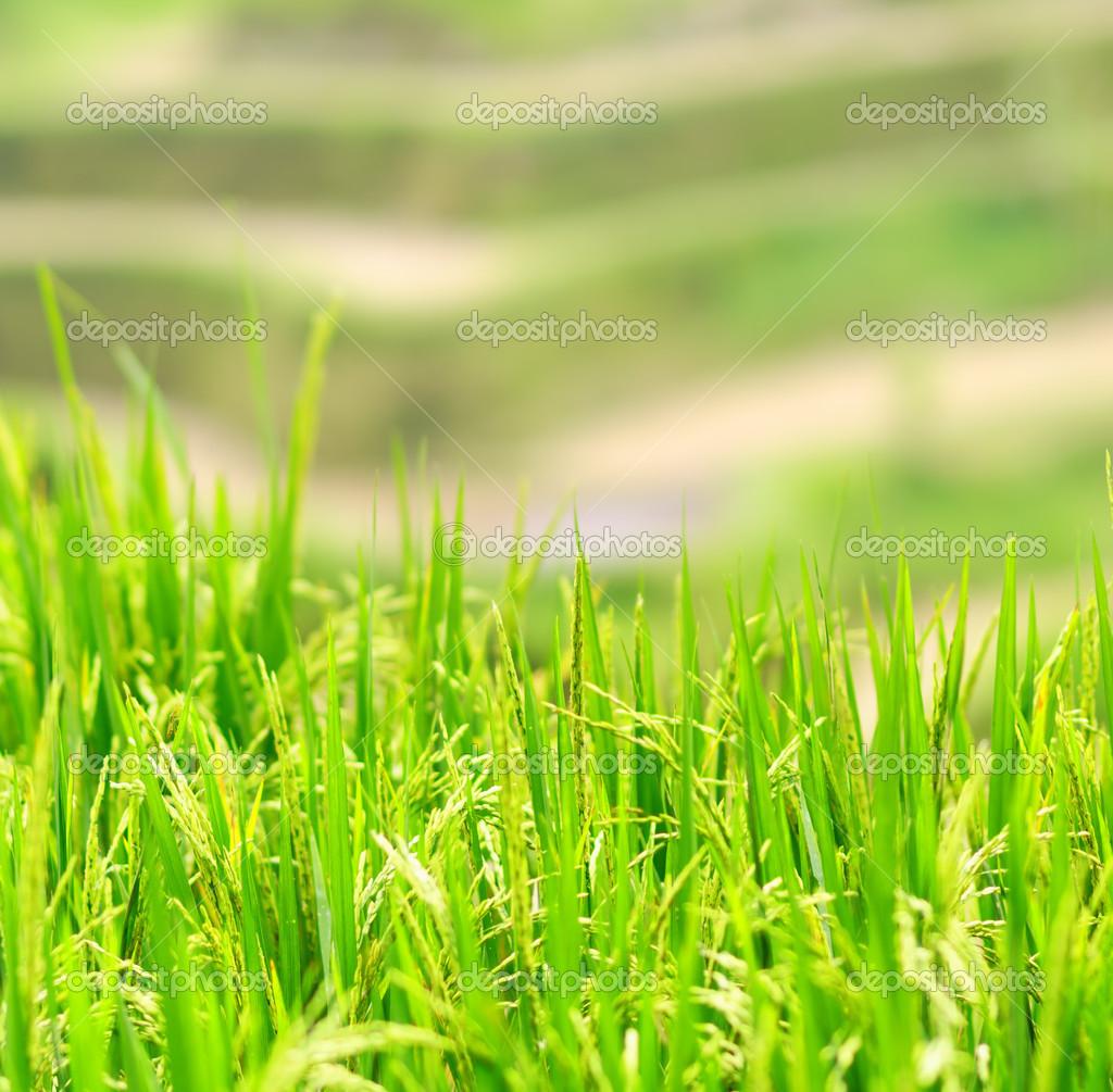 壁纸 草 成片种植 风景 绿色 植物 种植基地 桌面 1024_1005