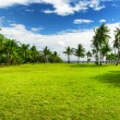 Green tree on the beach. Malcapuya island, Philippines — Stock Photo