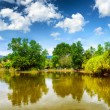 Tranquil pond in summer park — Stock Photo #36013545