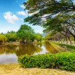 Tranquil pond in summer park — Stock Photo