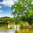 Stock Photo: Tranquil pond in summer park