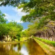 Tranquil pond in summer park — Stock Photo #36013627
